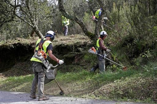ポルトガル、火災予防で森林を清掃・伐採