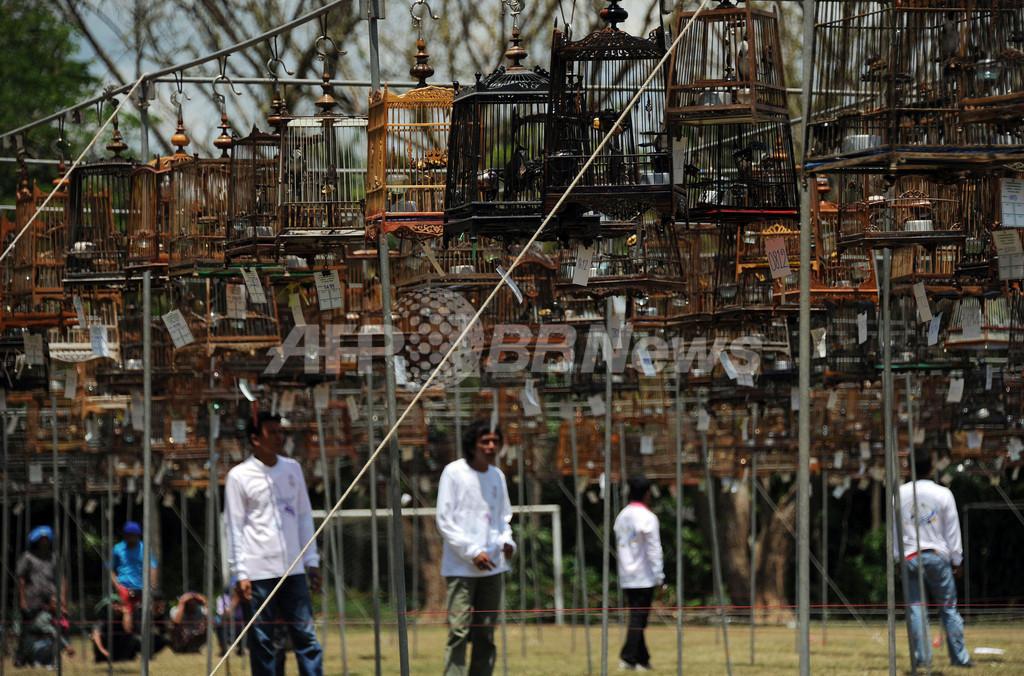 鳥の美声を競う「鳴き合わせ」大会開催、タイ