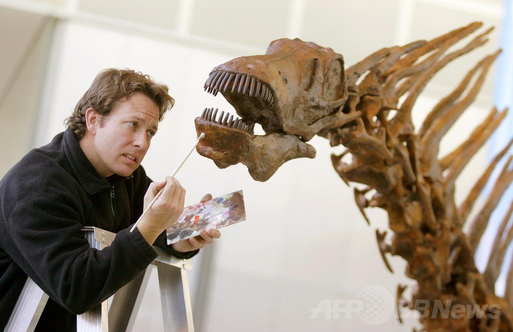 3億年前の「陸生草食動物の最古の祖先」の化石を発見、国際研究