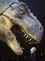 迫力満点!実物大の模型が動く恐竜ショー