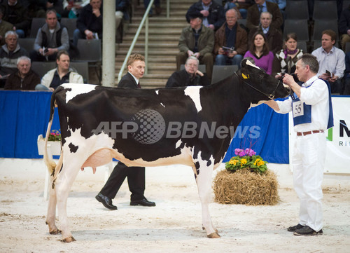 乳牛ベスト200が勢揃い、ドイツ2州で最も美しいウシたち