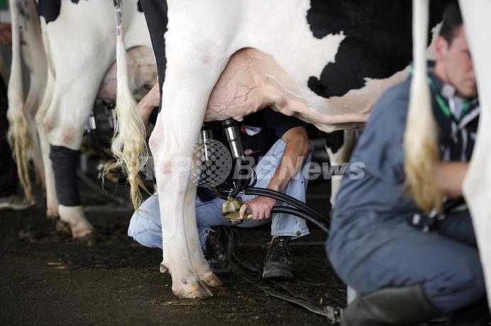 カナダの乳牛、生涯乳量で世界新記録 コップ100万杯分相当