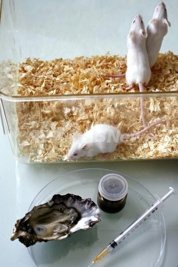 遺伝的に「2匹の父親」を持つ子マウスが誕生、米研究