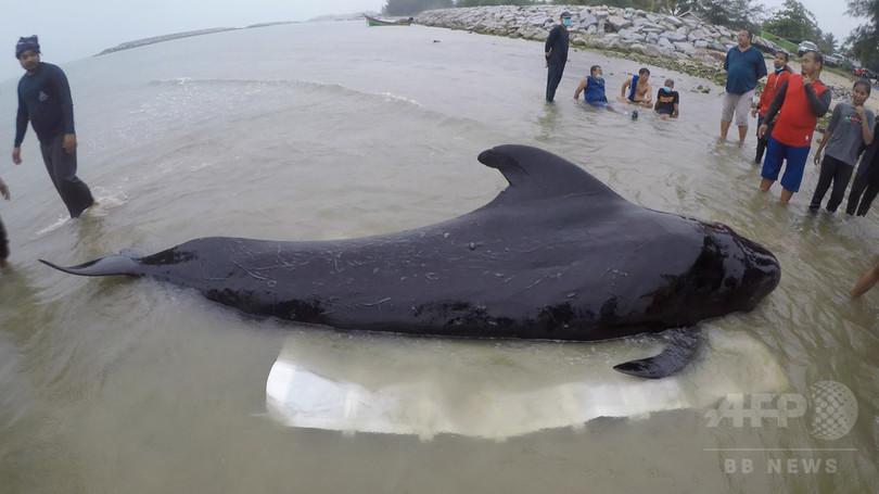 プラスチック袋80枚のみ込んだクジラ死ぬ タイ南部