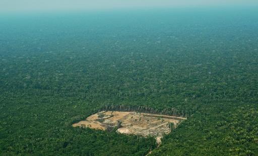 人為的影響で生物100万種が絶滅危機に、生物多様性の損失加速 国連報告書