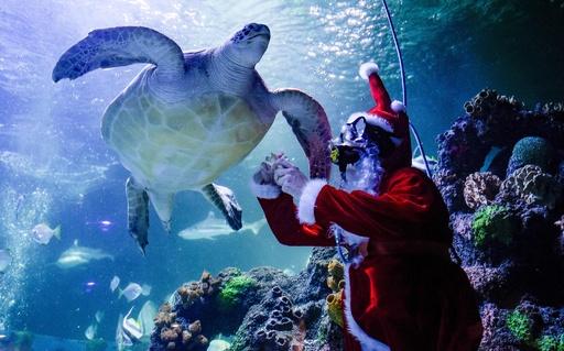もうクリスマス? 独水族館でサンタクロースが餌やり