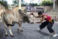 人と雄牛がぶつかり合う、中国のカンフー闘牛