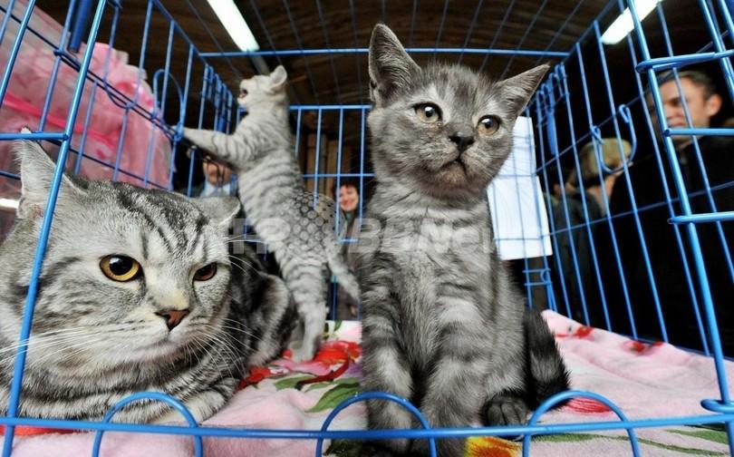 ネコ191匹と同居、劣悪環境に当局が介入 スウェーデン