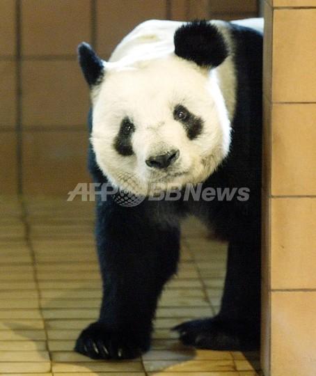 中国からのパンダ貸与をめぐり上野動物園に抗議が殺到
