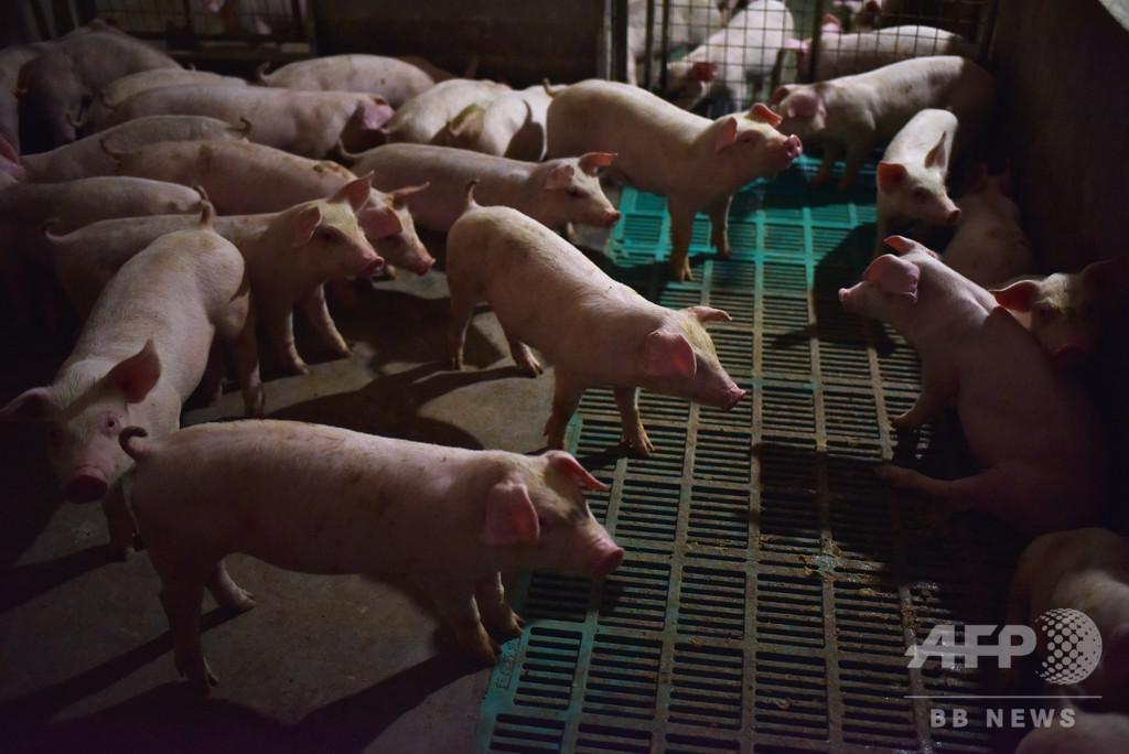 中国、韓国からのブタ輸入を禁止 アフリカ豚コレラ発生受け