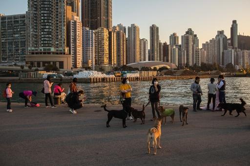 香港の犬、新型ウイルス検査で弱陽性反応 感染者のペット