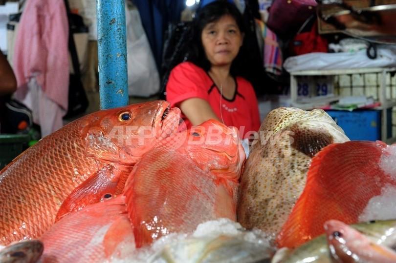 地球温暖化で魚が小さくなる、海水中の酸素不足で 米加研究