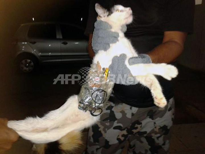 ブラジル刑務所の「運び屋」ネコ、看守に捕まる