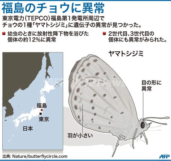 原発周辺のチョウ、羽や目に異常