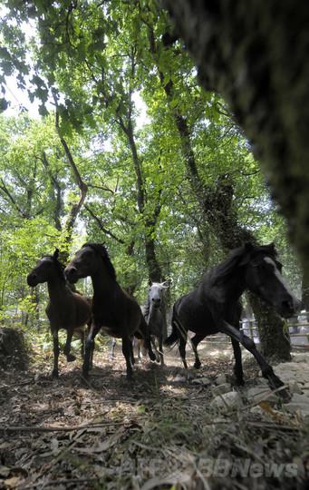 「再野生化」、スペイン自然保護の取り組み