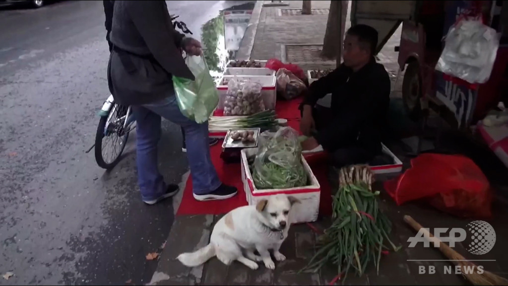 洛陽の「忠犬ハチ公」、身障者の主人と店を守る子犬 中国