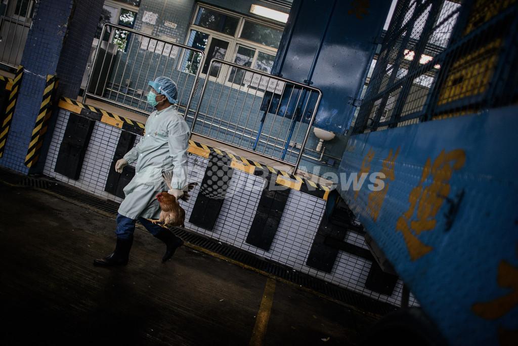 鳥インフルで男性死亡、3歳児重体 カンボジア