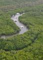 豪マングローブ林、7400ヘクタールが枯死 史上最大規模