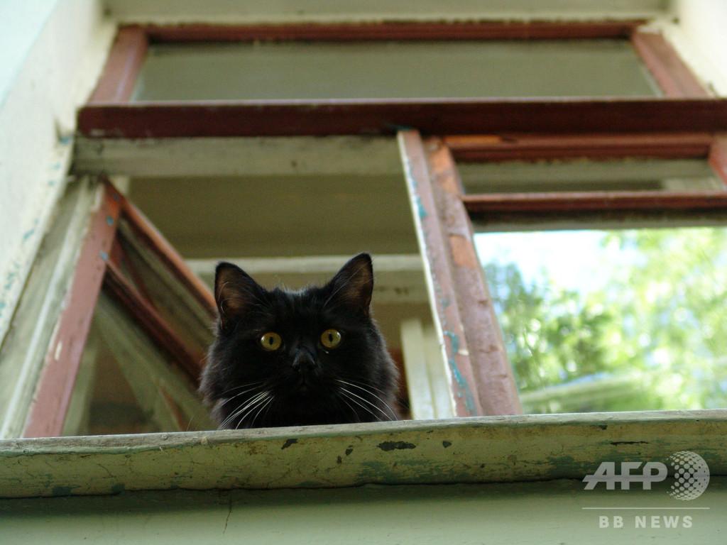 博物館の名物猫、不可解な誘拐事件に巻き込まれる ロシア