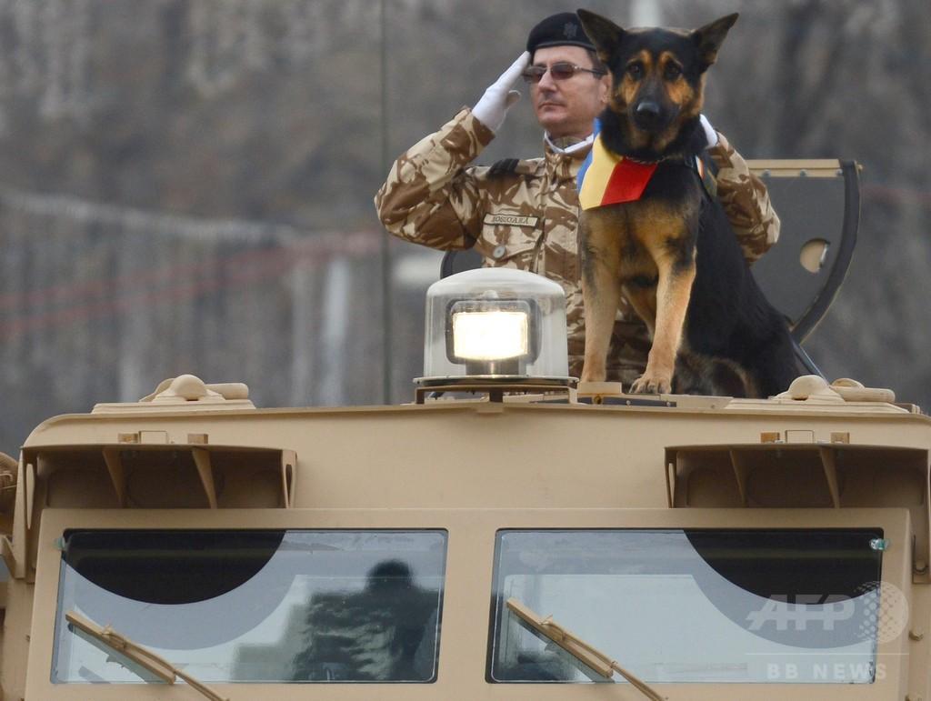 「英雄犬」救うための法改正、ルーマニア政府が命令