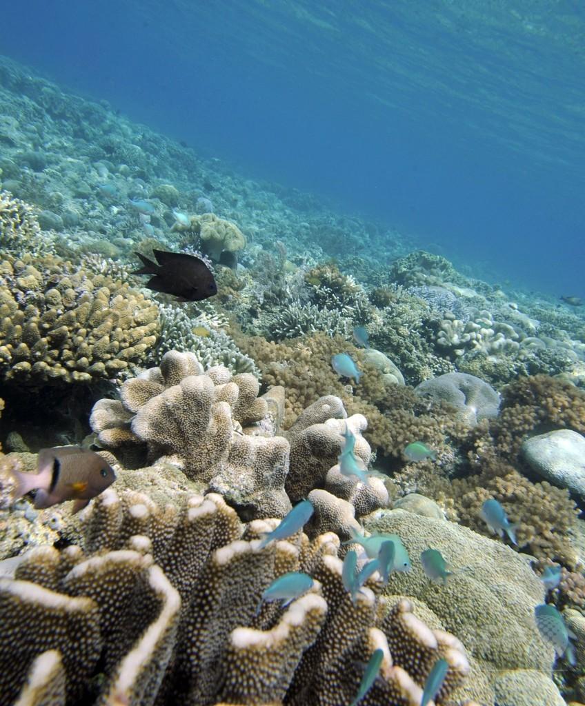 藻場の減少、サンゴと人の健康脅かす 研究