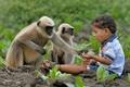 2歳男児とサルの群れの友情が話題、毎日欠かさず遊びに インド