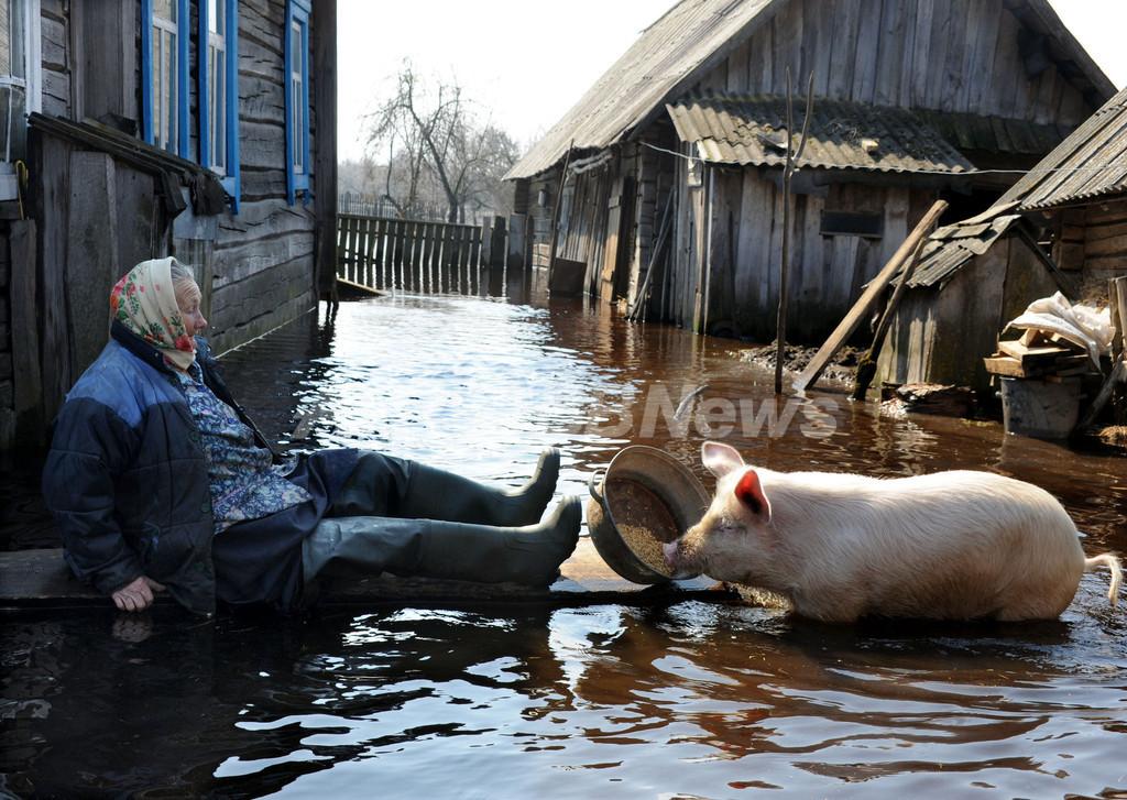 続く春の洪水、ベラルーシ南部