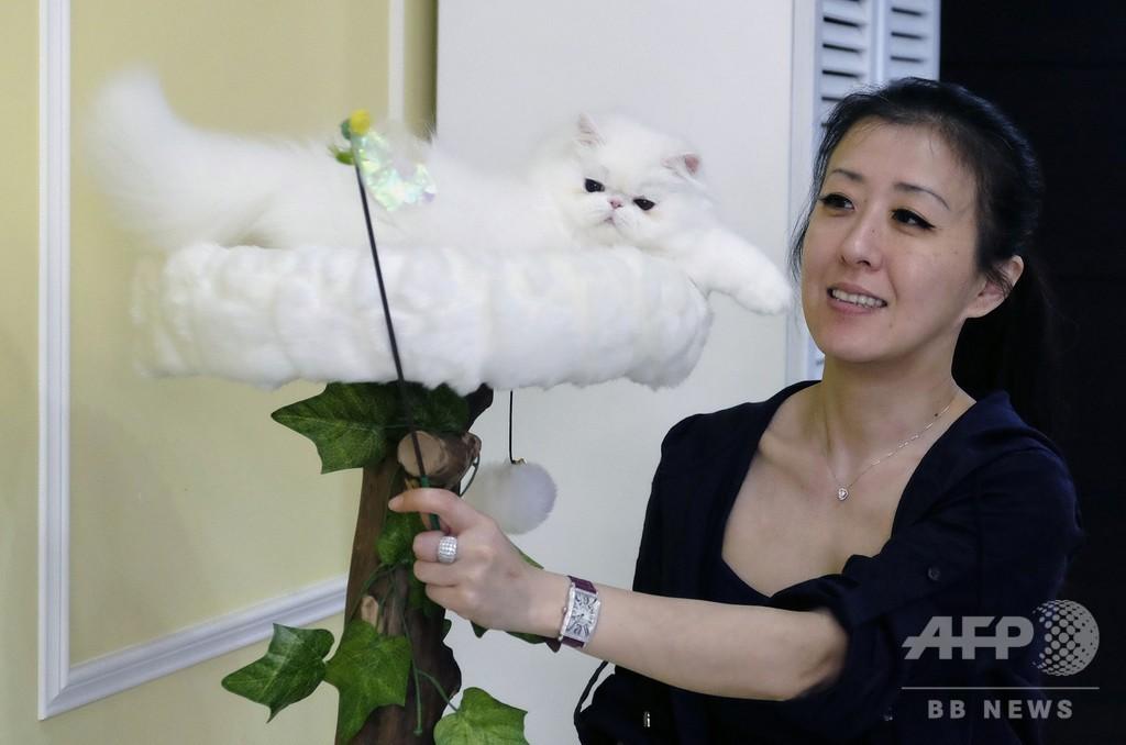 台湾で猫2匹盗んだ女、妊婦装い空港検査通過 香港へ持ち込む