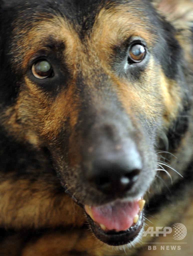 コロナ ウイルス 感染 症 犬