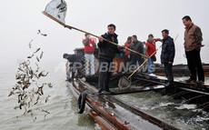 中国の毛ガニが浮き彫りにする汚染危機の根深さ