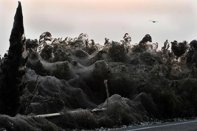 湖畔に悪夢の光景… クモ大量発生、全長1キロを巣で覆う ギリシャ
