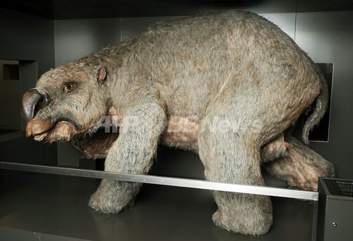巨大有袋類「ディプロトドン」の化石50体を発掘、オーストラリア