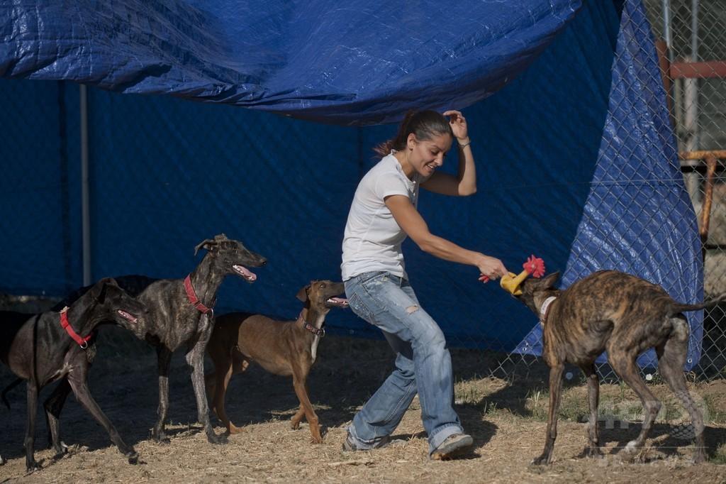 虐待・遺棄される狩猟用グレーハウンドを救え、スペイン
