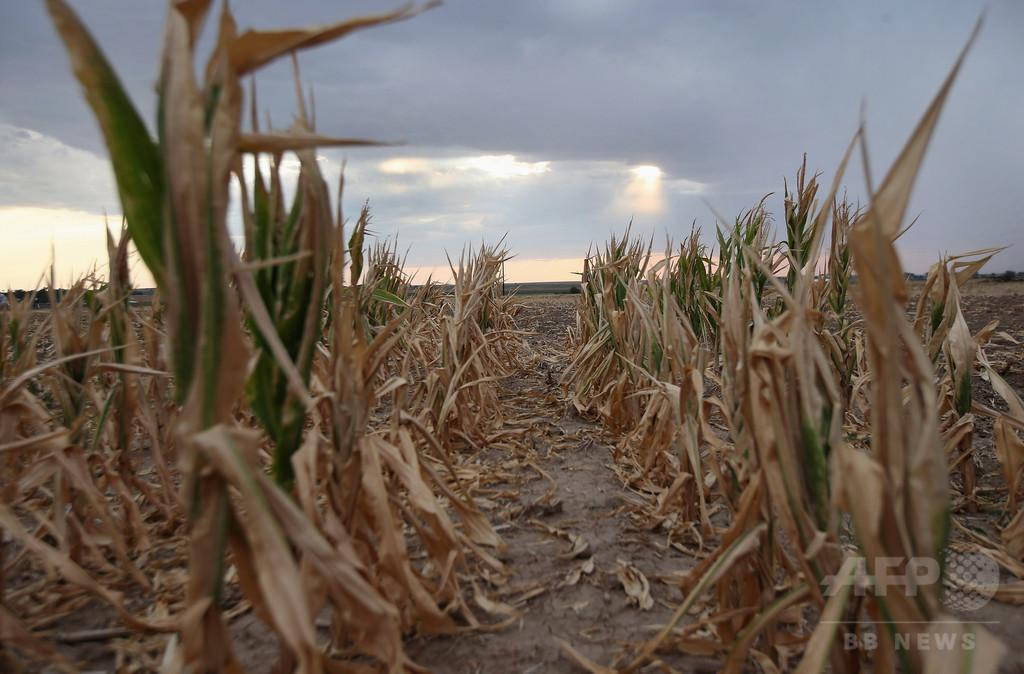気候変動が世界の食糧生産を阻害