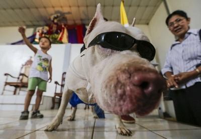 愛犬を着飾り健康祈願、中米ニカラグアで聖ラザロの祭り
