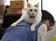 動画:オフィスに「猫同伴通勤」、ニャンとも癒やされるIT会社 東京