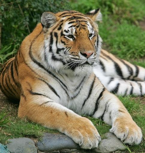 飼育員がトラに襲われ死亡、京都市動物園