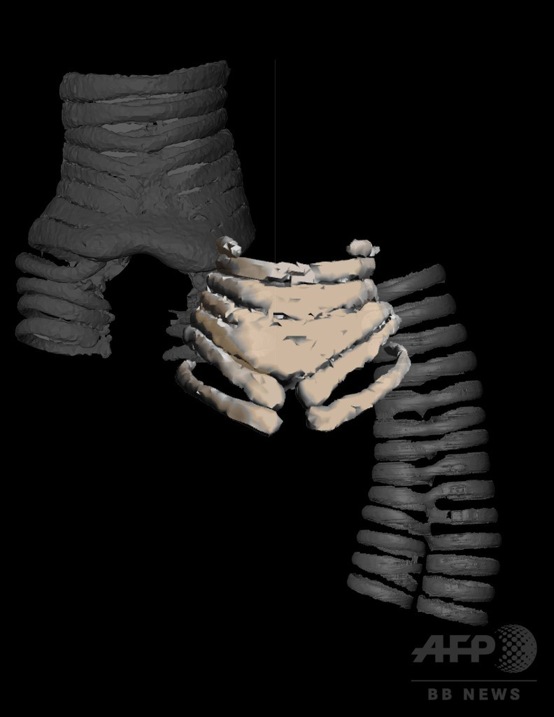 恐竜時代の鳥の発声器官か、最古の化石発見 研究