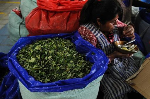 ボリビア、コカ栽培を拡大する新法案が成立