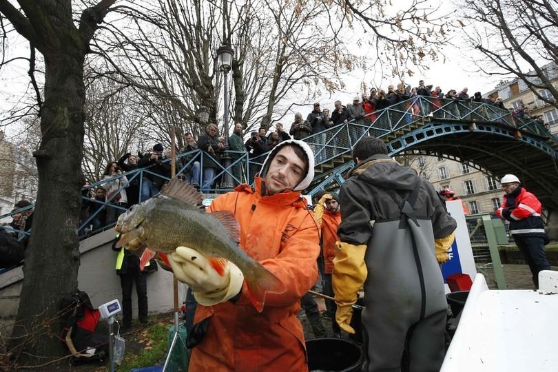パリで大規模な運河清掃、大量の魚がお引っ越し