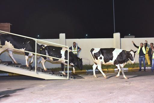 カタール、乳牛輸入で経済封鎖に対抗 8月までに4000頭