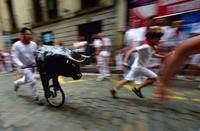この雄牛なら怖くない? スペインで子ども向け「小さな牛追い」