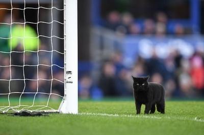 ピッチに黒ネコ登場、ウルブスが不吉な前兆振り払い勝利