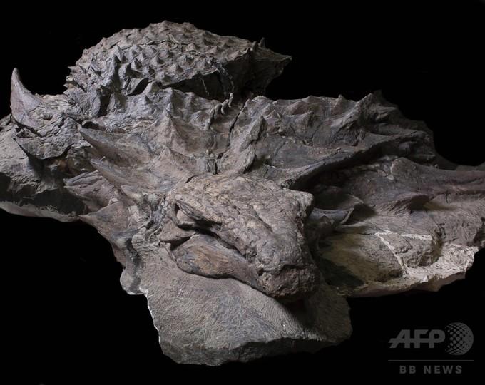 大型よろい恐竜の「生存の苦闘」、最新化石分析