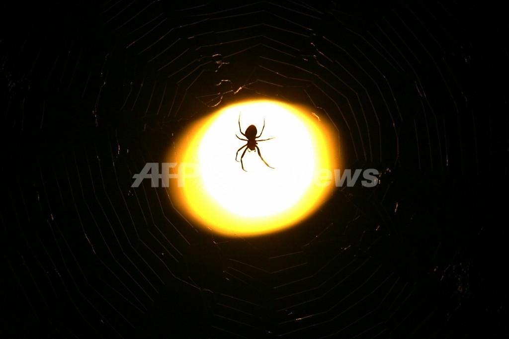 街灯は生態系を混乱させる、昆虫の個体群研究