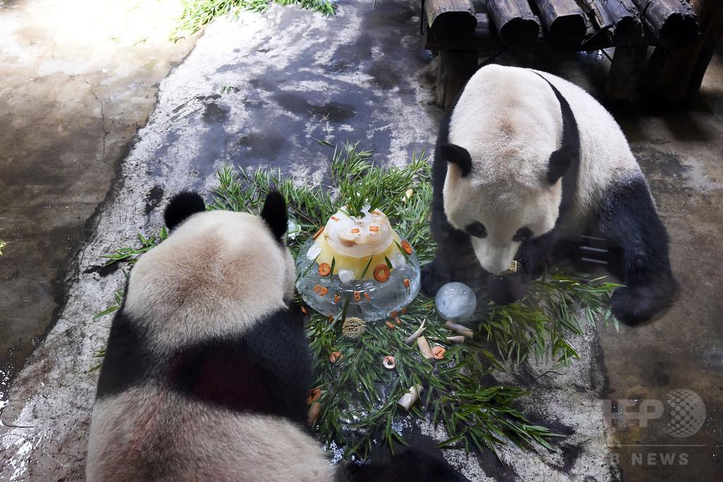 パンダ3歳のお誕生日会 杭州動物園