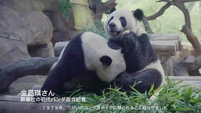動画:山間で野生パンダも記録 中国「パンダ記者」の物語