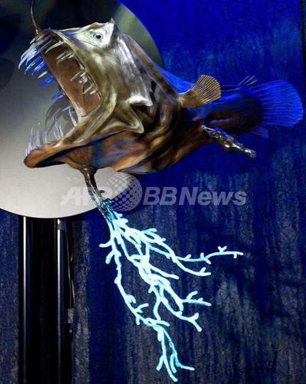 「光の生き物たち」展、米自然史博物館で開催