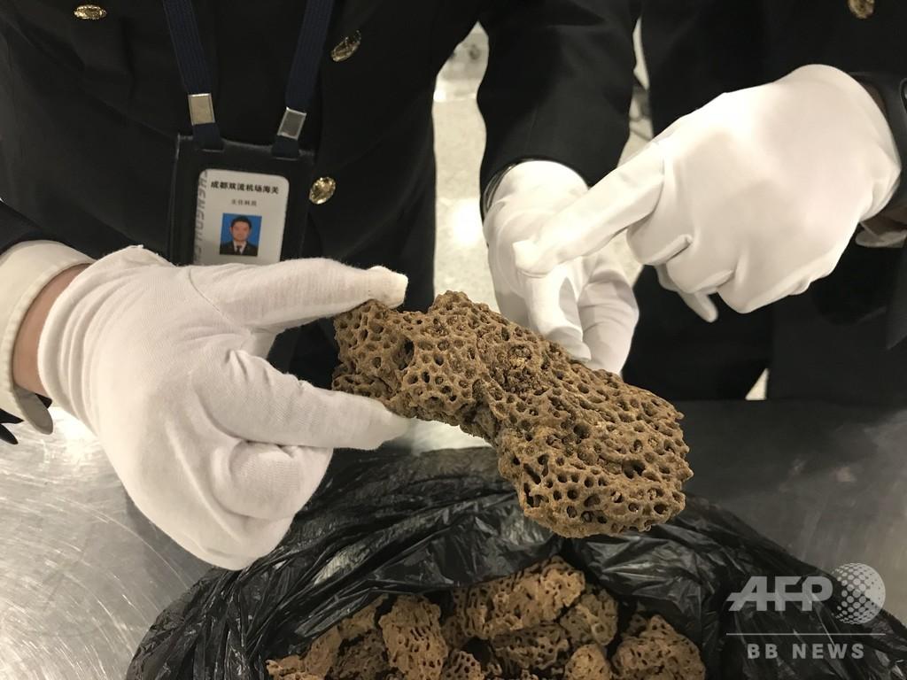 ペット用アリの密輸、税関で相次ぎ発覚 中国