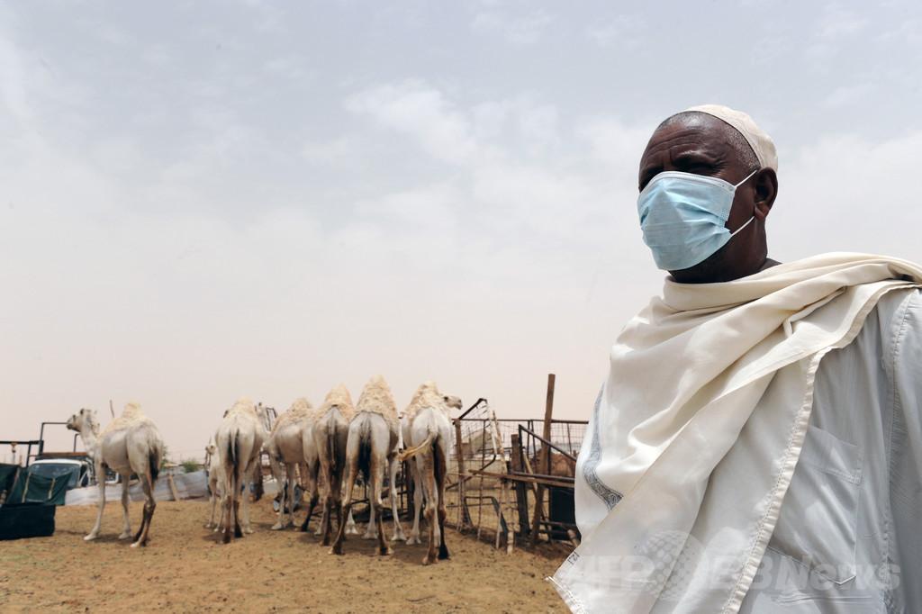 MERSウイルス感染源はラクダ、直接の証拠を確認 研究